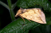 Mothing Lenawee County, August